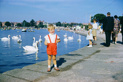 Geoffrey Valentine, 'Swans on boating lake', 1963