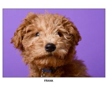 Dirk Westphal, 'Frank', 2018
