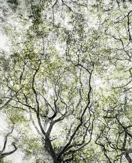 Santeri Tuori, 'Forest No.21', 2008-2012