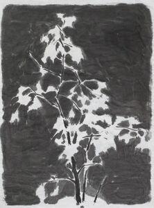 Wu Yiming 邬一名, 'The Gingko', 2013