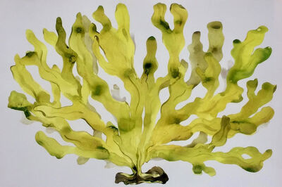 Idoline Duke, 'Big Yellow Seaweed', 2018