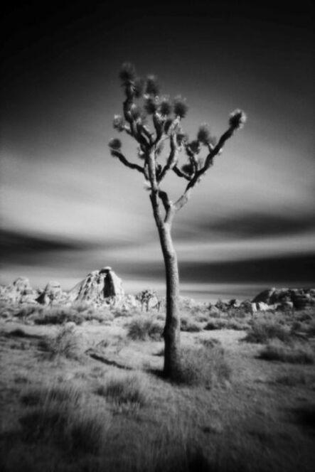 Cody S. Brothers, 'Black & White, Photography Pinhole: 'APR24 -Joshua Tree'', 2016-2018