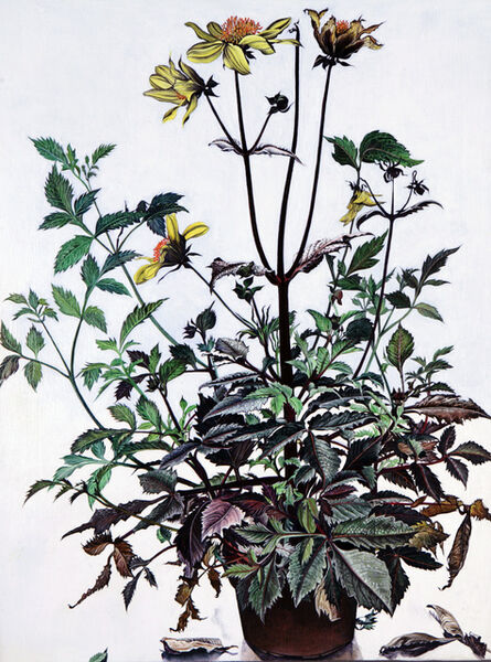 Ishbel Myerscough, 'Black Dahlia', 2009