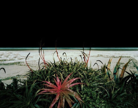 Edgar Martins, 'The Accidental Theorist', 2007