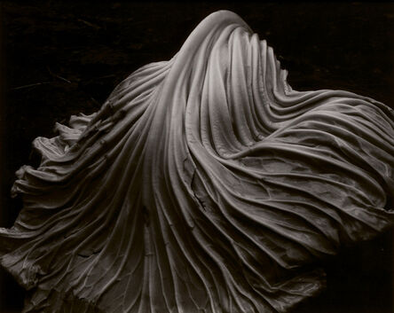 Edward Weston, 'Cabbage Leaf', 1931-c. 1952