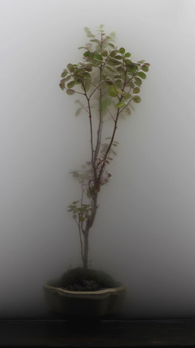 Wu Chi-Tsung, 'Still Life 03-Bonsai', 2009