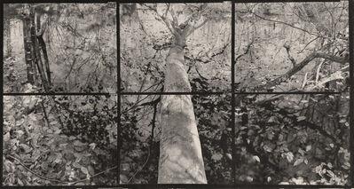 "Koichiro Kurita, '""A Fall in the Air"" Southold, NY ', 2013"