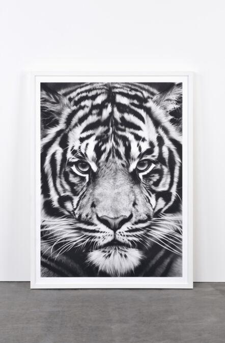 Robert Longo, 'Tiger, 2012', 2012