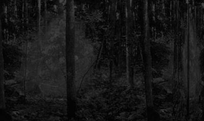 Stine Nielsen Ljungdalh, 'Location #3 Woodow', 2017