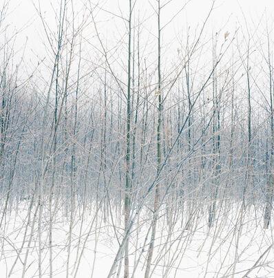 Debra Bloomfield, 'Wilderness 38055-10-08', 2014