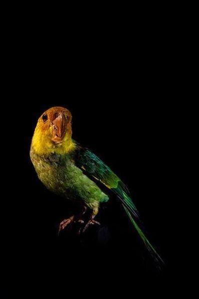Lucas Lenci, 'Oiseau V'