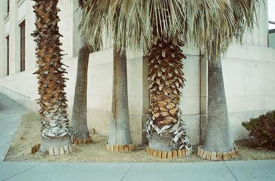 Lorena Lohr, 'Untitled (Texas Palms)', 2011