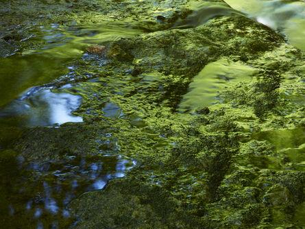 Meiki Lin, 'Reflection of Green Beech Woods', 2011