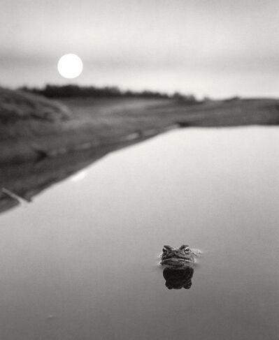 Pentti Sammallahti, 'Ristisaari, Finland (frog in water)', 1974