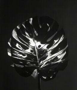 Susanna Kraus, 'Schatten I', 2015