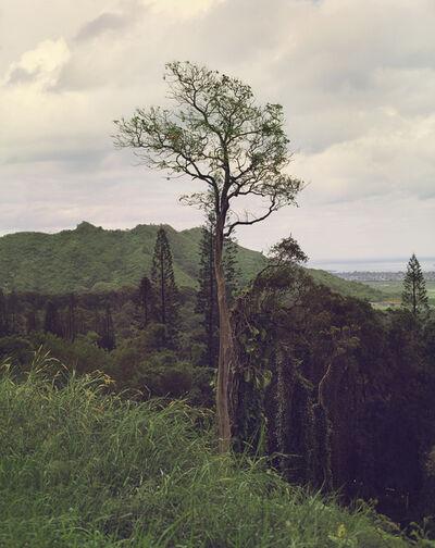 LM Chabot, 'Hawaii 41', 2015