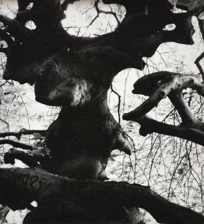 Brett Weston, 'Untitled (Tree Limbs)', nd