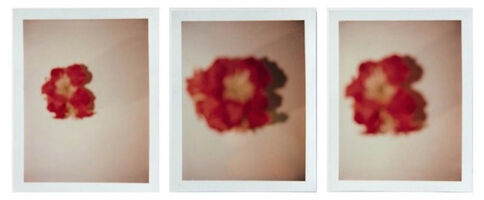 Andy Warhol, 'Andy Warhol, Set of Three Polaroid Photograph of Flowers', 1982
