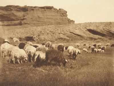 Edward S. Curtis, 'Navanho Flocks', 1907-1930