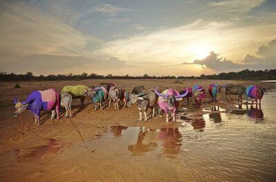 Maitree Siriboon, 'Family colors - Save Thai Buffalo series ', 2015