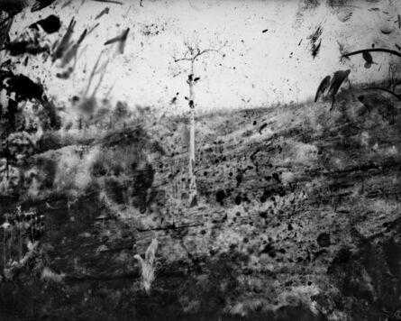 Richard Mosse, 'Burnt forest III, Amazonas', 2019