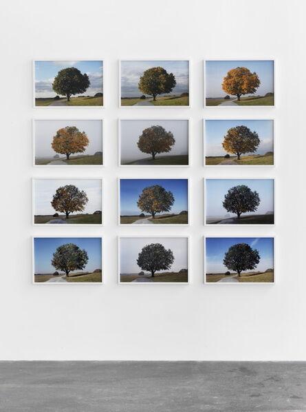 Michael Sailstorfer, 'Antiherbst (Anti-Autumn)', 2013