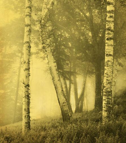 Joyce Tenneson, 'Birch Trees', 2011