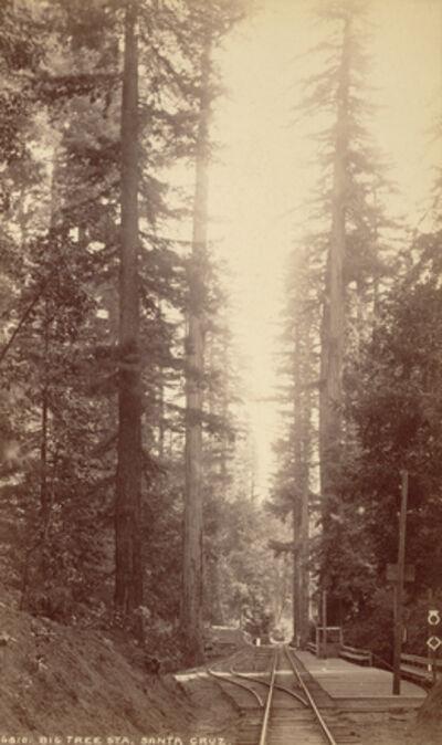 William Henry Jackson, 'Big Tree Station, Santa Cruz', 1871