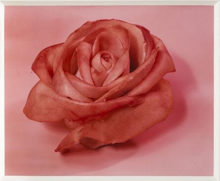 Sharon Core, 'Single Rose', 1997