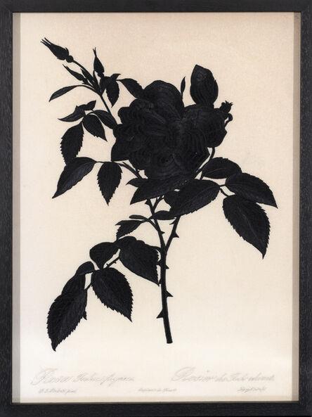 David Chalmers Alesworth, 'Dark Rosa Indica (Fragrans)', 2021