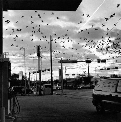 Earlie Hudnall, Jr., 'Black Birds', 2013