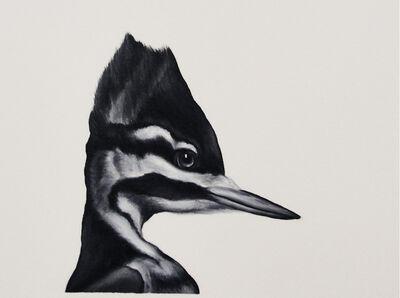 Shelley Reed, 'Ivory-billed Woodpecker', 2016