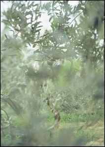 Joann Verburg, 'Camouflage', 2003