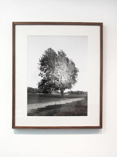 Risk Hazekamp, 'Tree', 2015