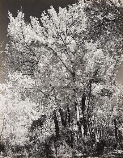 Ansel Adams, 'Autumn, Chama Valley', ca. 1951