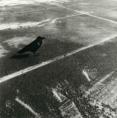 Ken Rosenthal, 'Raven', 2010