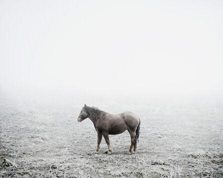 Tamas Dezso, 'Cart Horse (near Silvasu de Sus, West Romania), 2011, from the series Notes for an Epilogue', 2011