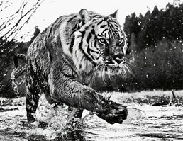 David Yarrow, 'Mystic River', 2015