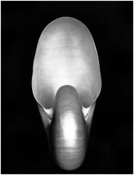 Edward Weston, 'Shell (1S)', 1927-printed later by Cole Weston