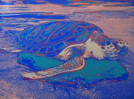 Andy Warhol, 'Turtle (FS II.360A)', 1985