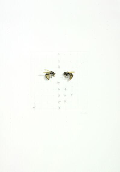 ALEXANDRA KONTRINER, 'hornets', 2012
