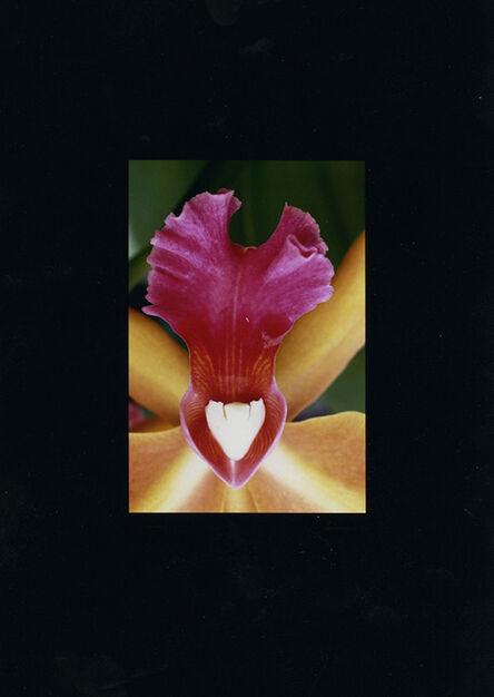 Alfred Eisenstaedt, 'Orchid', 1960 -69/1993