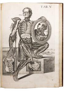 Pietro Berrettini, called Pietro da Cortona, ' Tabulae Anatomicae a Celeberrimo Pictore Petro Berrettino Cortonesi.', 1741