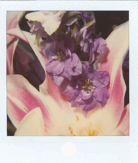 Nobuyoshi Araki, 'Flower polaroid', 2000-2004