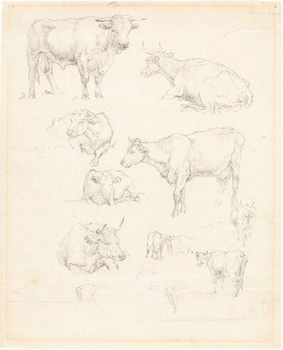 Robert Hills, 'Studies of Cattle'