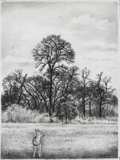 Anne C. Weary, 'Young Buck with Cedar Elm', 2013