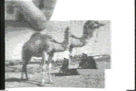 Peer Bode, 'Camel with Window Memory', 1983