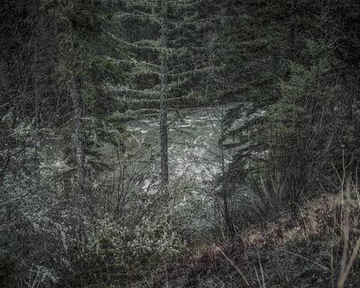 Chris Bennett, 'From the series Darkwood, #9', 2014