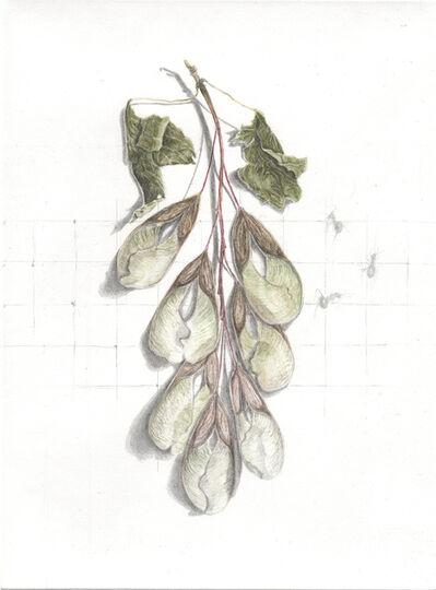 ALEXANDRA KONTRINER, 'maple seeds', 2013