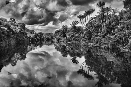 Sebastião Salgado, 'Landscape of an igapó, a type of forest frequently flooded by river water, with jauari palm trees (Astrocaryum jauari), Jaú River, Jaú National Park, state of Amazonas', 2019 [printed on request]